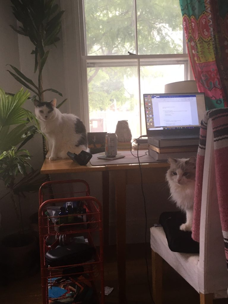 My work station and two of my cats